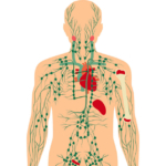 lymfekræft, lymfesystemet og lymfeknuderne
